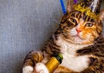 CatNYEBanner